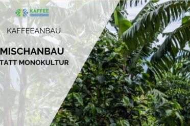 So geht nachhaltiger Kaffeeanbau: der Vorteil kleinbäuerlicher Permakultur im Vergleich zu Kaffeeplantagen